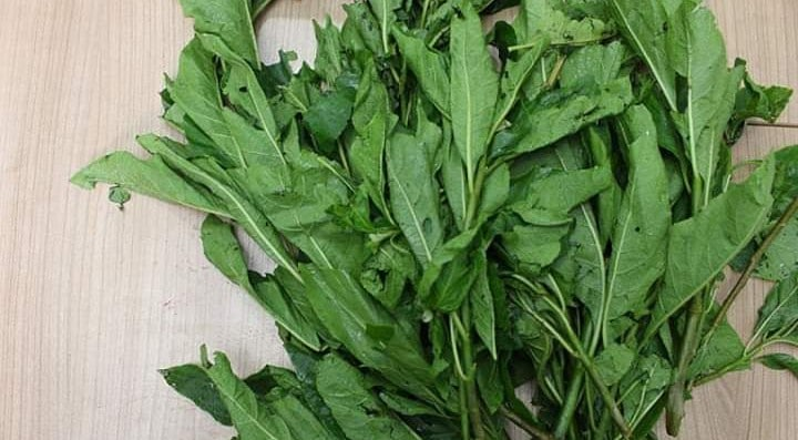 health benefits of bitter leaf