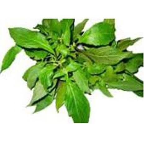 Nutritional value of scent leaf