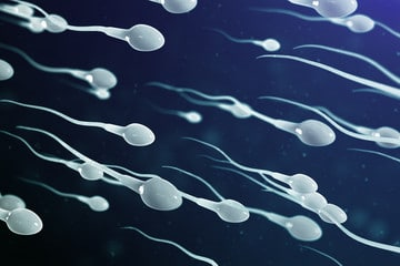 Are there any disadvantages of releasing sperm daily?