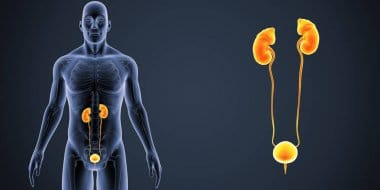 Ways To Care For Your Urinary System